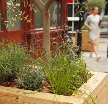 Tree planter on Charlotte Road